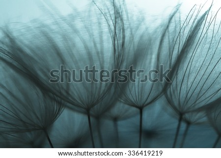 Abstract dandelion flower background, extreme closeup. Big dandelion on natural background. Art photography  - stock photo