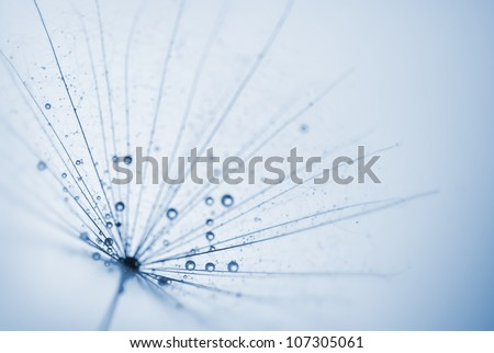 abstract dandelion flower background with water drops - stock photo