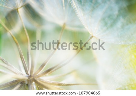 abstract dandelion flower detail background, closeup with soft f - stock photo