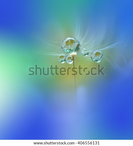 Abstract dandelion flower seeds with water drops background.