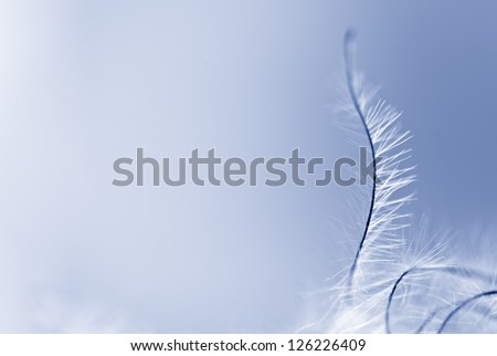 Abstract dandelion seed - stock photo