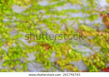 Abstract De-focused Background Image of Ivy on a Wall  - stock photo
