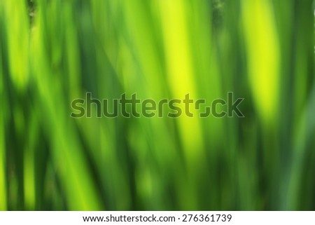 Abstract defocused green background - green grass leaves - stock photo