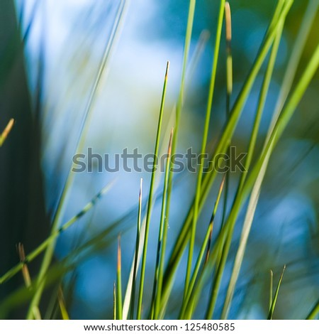 Abstract detail of a cane plant. - stock photo