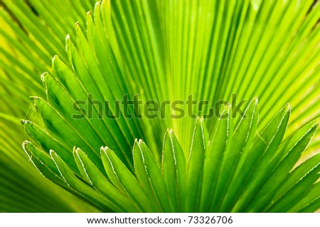 Abstract Detail of Coconut leaf - stock photo