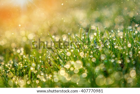 abstract dreamy and blurred image of grass with sun flare. drops of dew, small depth of field. used as background. color in nature. fabulous beauty of nature - stock photo