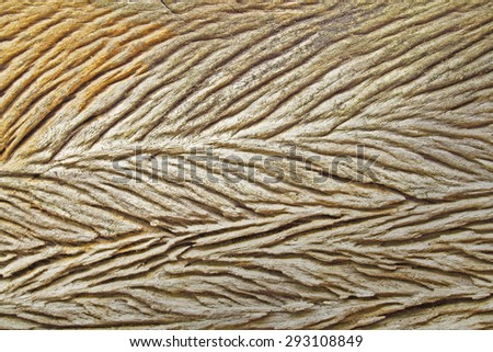Abstract dry wood pattern for background