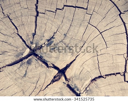 Abstract dry wood pattern for background - stock photo