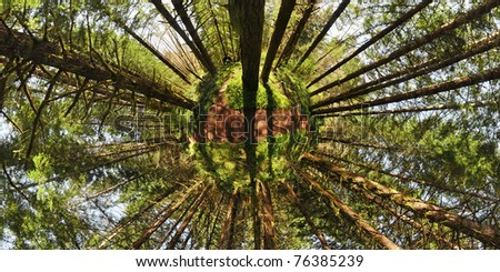 Abstract environmental green forest planet with large long trees - stock photo