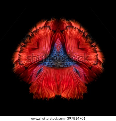 Abstract fine art fish tail free form of Betta fish or Siamese fighting fish isolated on black background - stock photo