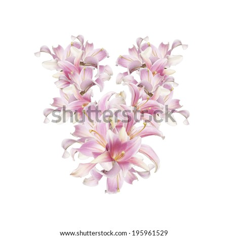 Abstract Floral background.Lily Japanese