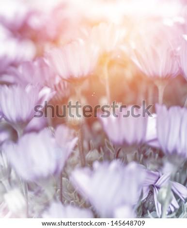 Abstract floral background, soft focus, little gentle flowers, daisy field, fine art, bright sun light, summer nature - stock photo