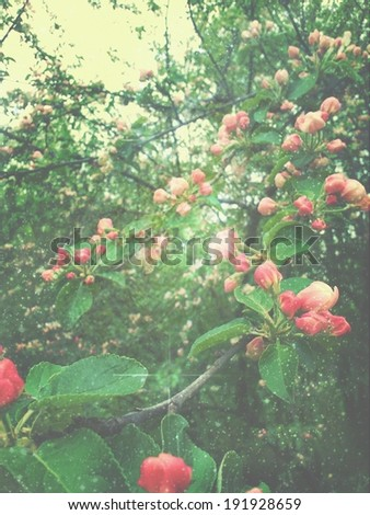 Abstract floral background with the vintage flowers - stock photo