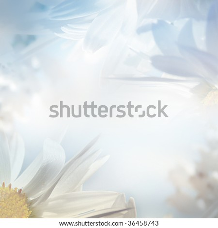 abstract floral pastel toned background with camomiles - stock photo