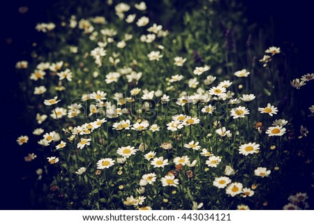 Abstract flower background in vintage style with soft selective  - stock photo