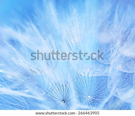 Abstract flower background, macro photo of a gentle blue dandelion backdrop, beauty of nature, spring time season - stock photo