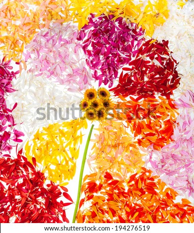Abstract flower with petals around - stock photo