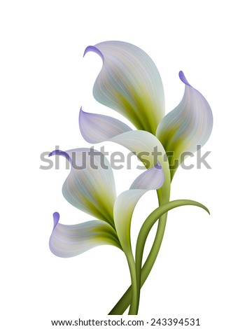 abstract flowers illustration isolated on white background, design elements - stock photo