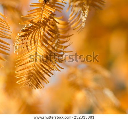 Abstract foliage background, beautiful tree branch in autumnal forest, bright warm sun light, orange dry leaves, autumn season - stock photo