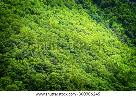 abstract fresh green tree in spring