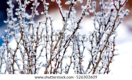 Abstract frosted twig with thorns
