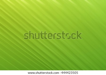 Abstract gradient background with green  banana palm leaf  structure - stock photo