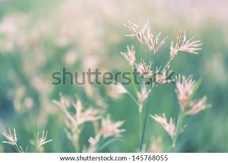 Abstract grasses - stock photo