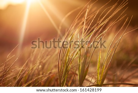 Abstract grasses in the late sun - stock photo