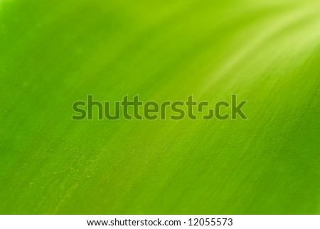 Abstract green background. Macro shot - stock photo