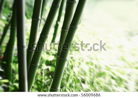 Abstract green bamboo grove. - stock photo