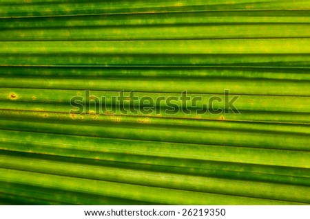 abstract green big leaf close up - stock photo