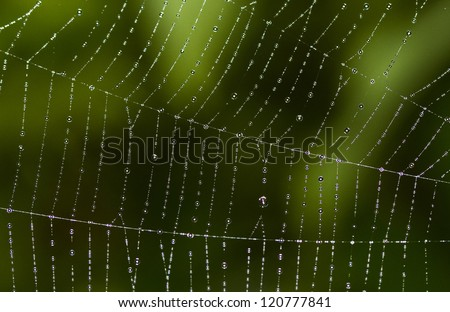 Abstract green cobweb with dew drops. - stock photo