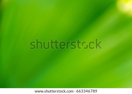 Abstract green leaf blurred background