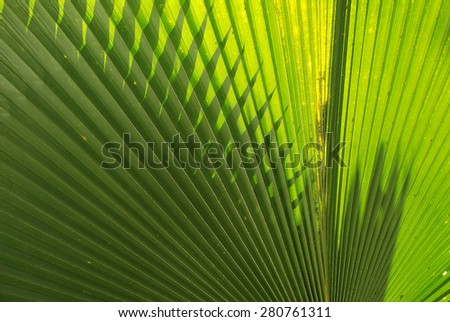 Abstract green leaf motifs. - stock photo