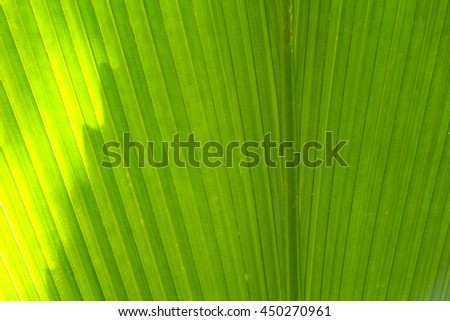 Abstract green leaf texture,select focus with shallow depth of field:ideal use for background.