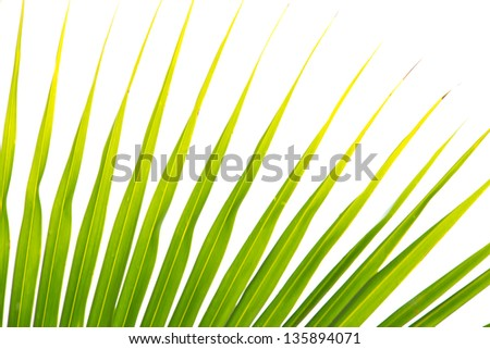 Abstract green leaves background - stock photo
