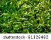 Abstract green moss background - stock photo