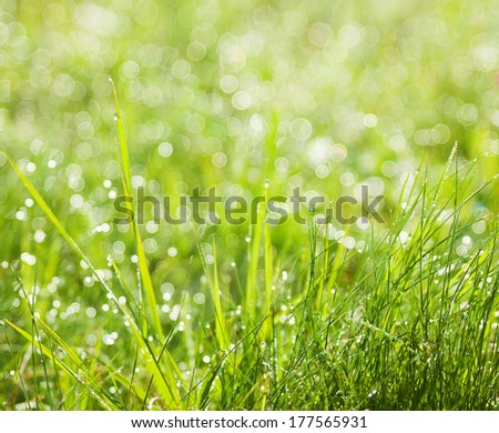 Abstract green natural background. Fresh spring grass with drops on natural defocused light green background. Shallow DOF - stock photo