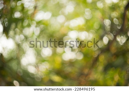 abstract green nature background with blurry bokeh - stock photo