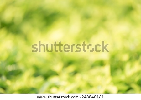 Abstract green nature background with blurry bokeh defocused - stock photo
