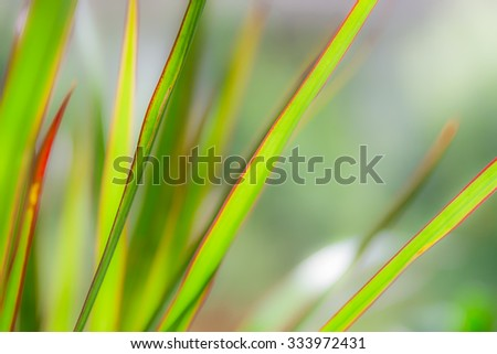 Abstract green plant texture blurred lines.  Natural background pattern, wallpaper art for garden blogs, business websites - stock photo