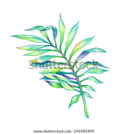 abstract green tropical palm leaf, watercolor illustration isolated on white background - stock photo