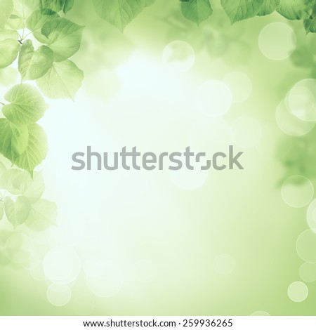 Abstract greenery foliage morning sunlight background - stock photo