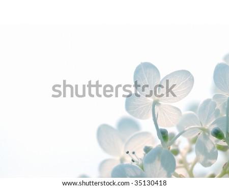 Abstract Hydrangea Flowers - stock photo