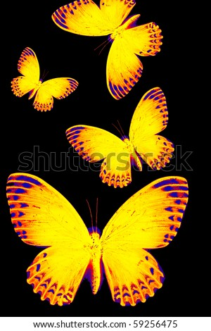 Abstract image of a translucent glowing butterfly on black background. - stock photo