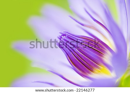 abstract image of close-up lotus flower water-lily Nelumbo nucifera - stock photo