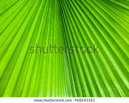 Abstract image of green palm leaf for background.