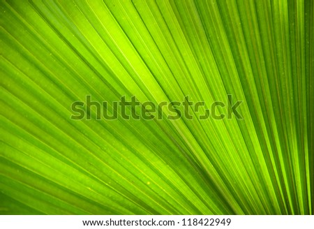 Abstract image of Green Palm leaves in nature - stock photo