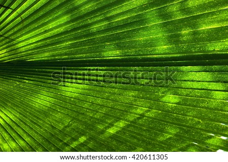 Abstract image of Green Palm leaves in nature, pervading light over green leaf  - stock photo