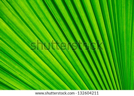 Abstract image of green palm tree leaf for background